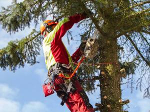 Spezialfällungen und Baumpflege