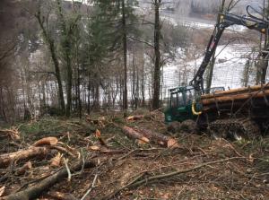 Holzrücken aus dem Wald mit Forwarder